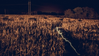 Electric Corn Maze