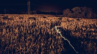 Electric Corn Maze
