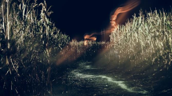 Phantome Corn Maze