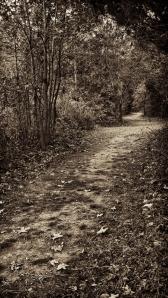 Songbird Trail