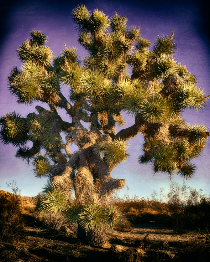 This seemed like a wise old Joshua Tree. I had fun combining different effects from various plugins for a more artistic approach.