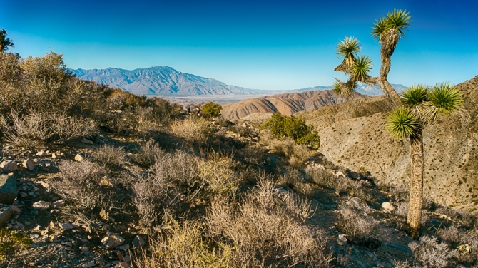 The landscapes at the Joshua Tree National Park are so diverse. I loved having the chance here to get a Joshua Tree with the mountains in the background. Coming soon: the Cholla Cactus Garden and Cottonwood Oasis.