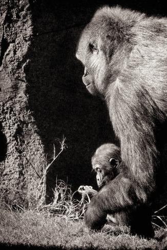 Gorilla manicure.