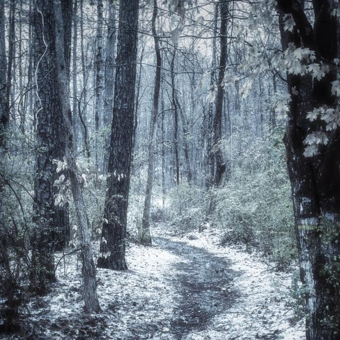 A snowy Path on the Mercer University Bear Trail on the Atlanta campus.