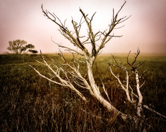 In addition to the skeletal branches stretching out over the marshes, there were single trees out in their midst. I wonder how those larger trees survived the  Battle of Dagorlad during the Last Alliance of Elves and Men.