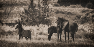 The horse herd seemed to work together as a family unit.